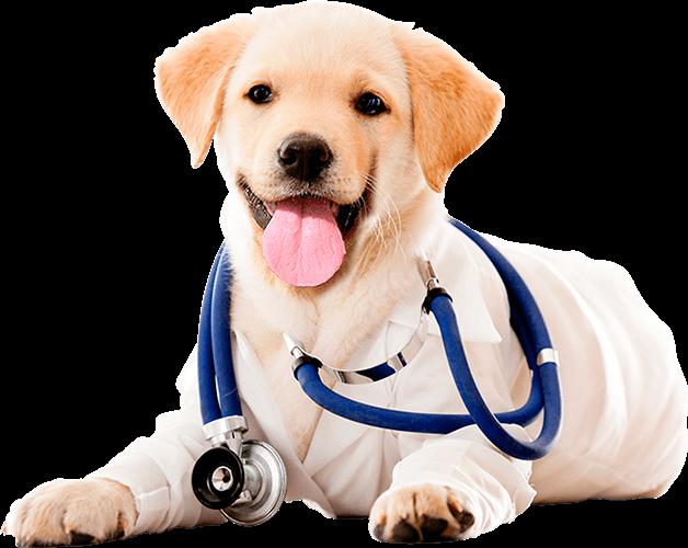 Cachorro com estetoscópio