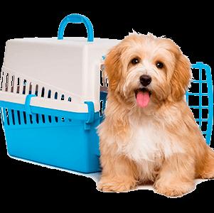 Cachorro com caixinha de transporte